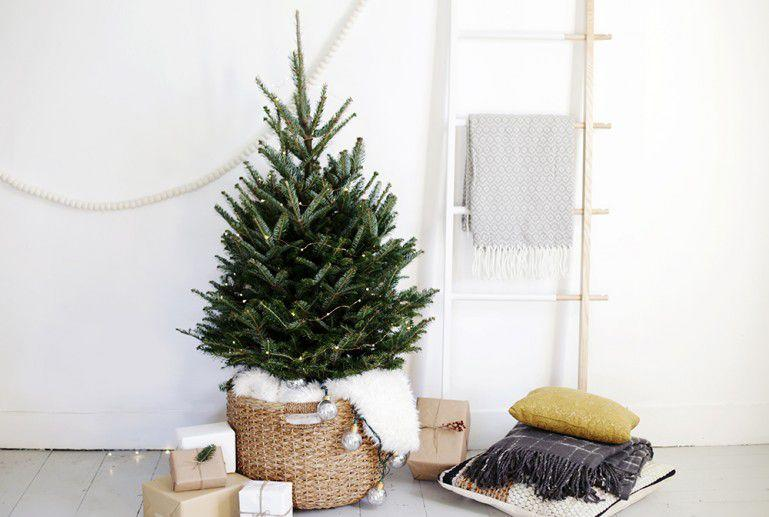 if you live in a small space christmas poses a serious problem - Small Live Decorated Christmas Trees