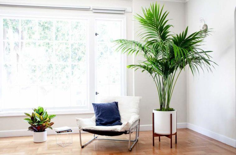 Accentuate with large plants