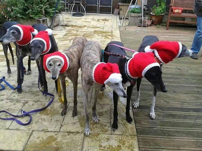 "<p>Jan Brown, 52, from Seaburn, England, knits sweaters, hats, and neck warmers for rescued greyhounds — and not just because they're completely adorable. <i>(Photo: Jan Brown via <a href=""https://www.facebook.com/KnittedDogClothes/photos_stream"" rel=""nofollow noopener"" target=""_blank"" data-ylk=""slk:Facebook"" class=""link rapid-noclick-resp"">Facebook</a>)</i><br></p>"