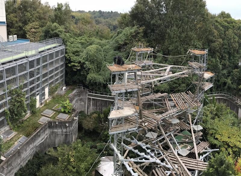The chimpanzee enclosure at the Primate Research Institute, Kyoto University
