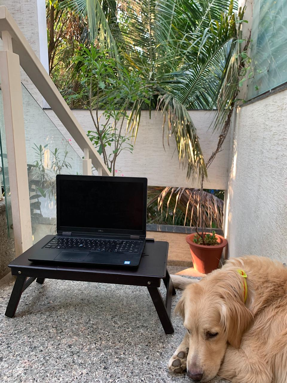 Bring your pet to keep you company while you work Photo credit: Kezhia Sharieff