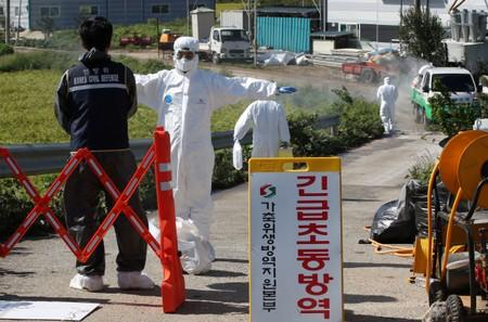 Quarantine officials wearing protective gear block a road that leads to a pig farm involved in African swine fever in Paju