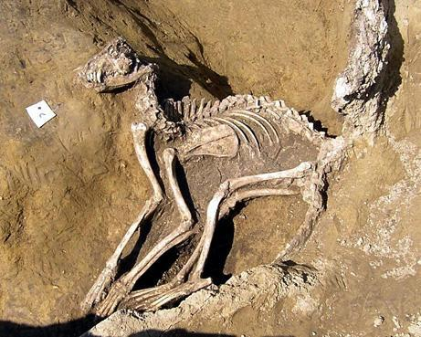 Remains of a dog that was sacrificed in the feast of Lupercalia in ancient Rome