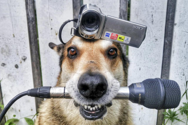<p>Toby balances a camera on his head with a microphone in his mouth.(Photo: Pat Langer/Caters News) </p>
