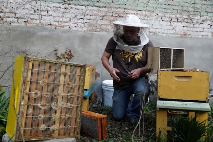 Urban beekeeper Andrew Cote replenishes bee hives at Clinton Community Garden in the Hell's Kitchen area of New York City
