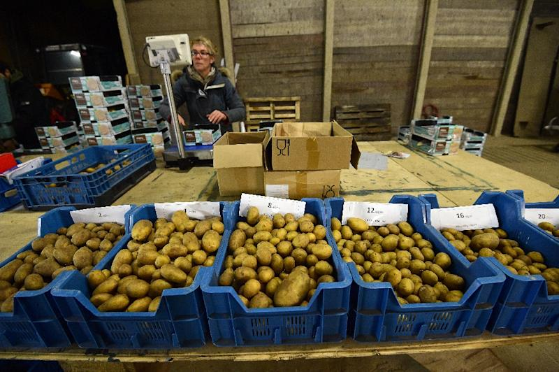 A worker sorts potatoes before packaging them at the Salty Potato Farm, in Den Horn, Netherlands (AFP Photo/Emmanuel Dunand)