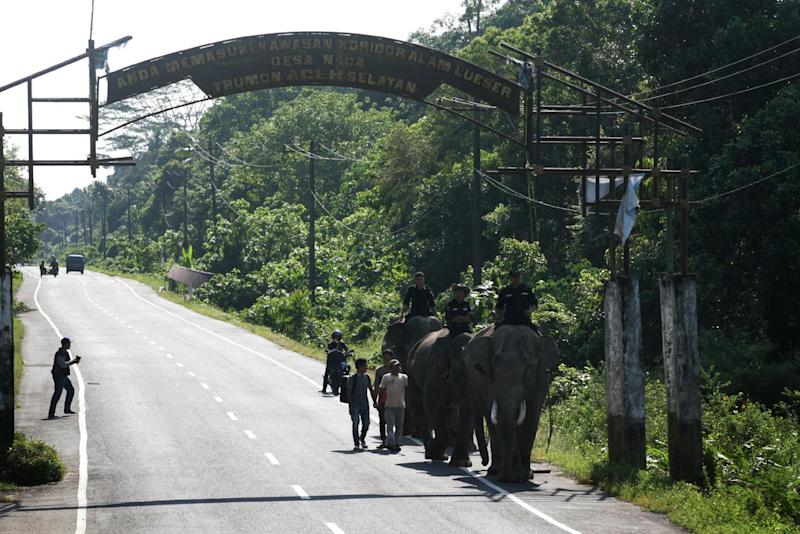Indonesian forest rangers patrol on Sumatran elephants in Trumon sub-district in province of Aceh, Sumatra island (AFP Photo/Chaideer Mahyuddin)