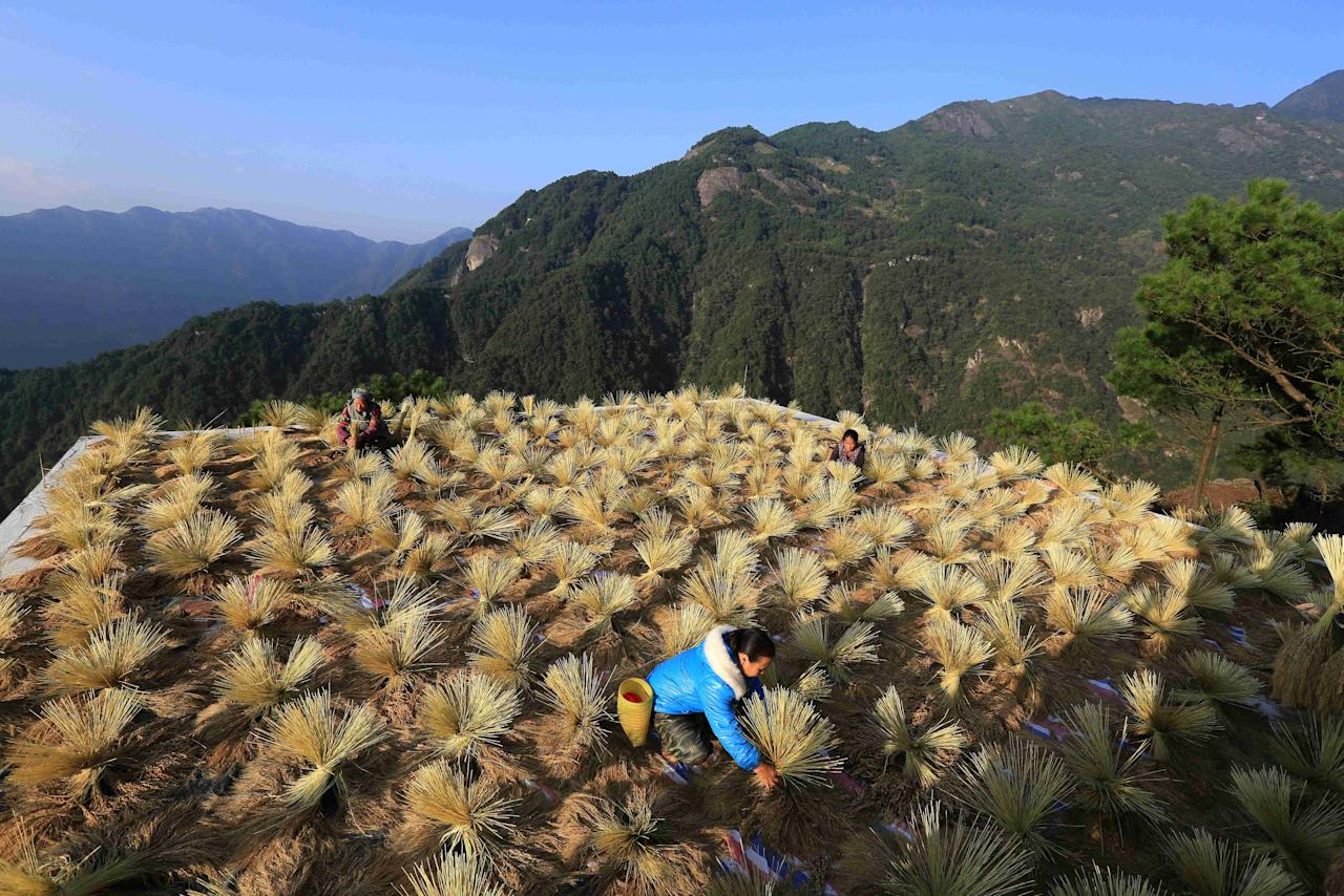 Villagers dry crops during harvest season in a village in Liuzhou, Guangxi Zhuang Autonomous Region, China October 22, 2017. Picture taken October 22, 2017. REUTERS/Stringer ATTENTION EDITORS - THIS IMAGE WAS PROVIDED BY A THIRD PARTY. CHINA OUT.