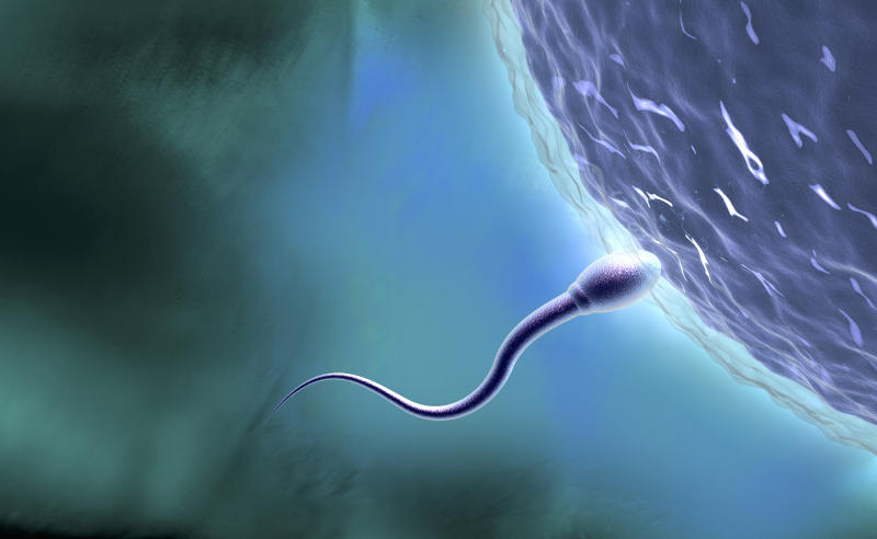 Single sperm meets egg symbolises virgin pregnancy birth penetrative sex