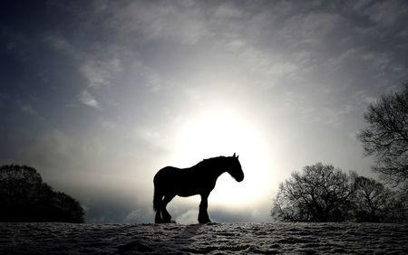 A horse stands in a snow covered field in Keele, Newcastle-under-Lyme
