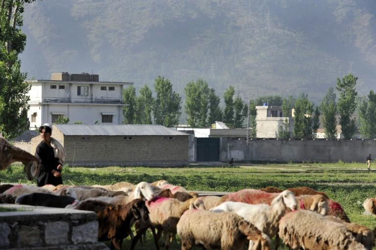 A Pakistani shepherd herds his goats past the hideout (now destroyed) of Al-Qaeda leader Osama bin Laden, who was killed by US Special Forces on May 2, 2011 in Abbottabad