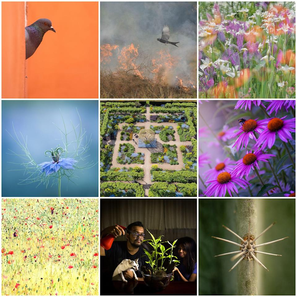 """<p><strong>The Royal Horticultural Society has revealed the winners of the 2021 <a href=""""https://go.redirectingat.com?id=127X1599956&url=https%3A%2F%2Fwww.rhs.org.uk%2F&sref=https%3A%2F%2Fwww.housebeautiful.com%2Fuk%2Fgarden%2Fg36161709%2Frhs-photographic-competition-2021%2F"""" rel=""""nofollow noopener"""" target=""""_blank"""" data-ylk=""""slk:RHS"""" class=""""link rapid-noclick-resp"""">RHS</a> Photographic Competition, showcasing the winning images that capture the beauty of nature, gardens and plants.</strong></p><p>The winning images were selected from thousands of photographs from amateur and professional photographers around the world.</p><p>'The diversity of imagery in this year's competition has been astounding, with some very creative, unusual, dark, joyful and sometimes humorous work entered,' says award winning garden photographer and competition Judge, Richard Bloom. 'No doubt in some way a response to the pandemic and the lockdown people have endured, but also the introduction of the new Creative and Indoor Gardening categories which have given photographers a greater opportunity to get creative within their own boundaries.'</p>The winning photographs are available to view online at <a href=""""https://go.redirectingat.com?id=127X1599956&url=https%3A%2F%2Fwww.rhs.org.uk%2Fpromotions%2Frhs-photo-competition&sref=https%3A%2F%2Fwww.housebeautiful.com%2Fuk%2Fgarden%2Fg36161709%2Frhs-photographic-competition-2021%2F"""" rel=""""nofollow noopener"""" target=""""_blank"""" data-ylk=""""slk:rhs.org.uk/photocomp"""" class=""""link rapid-noclick-resp"""">rhs.org.uk/photocomp</a> and will be on display at all five <a href=""""https://go.redirectingat.com?id=127X1599956&url=https%3A%2F%2Fwww.rhs.org.uk%2Fgardens&sref=https%3A%2F%2Fwww.housebeautiful.com%2Fuk%2Fgarden%2Fg36161709%2Frhs-photographic-competition-2021%2F"""" rel=""""nofollow noopener"""" target=""""_blank"""" data-ylk=""""slk:RHS Gardens"""" class=""""link rapid-noclick-resp"""">RHS Gardens</a> in September 2021. Here are the overall winning images and winners of each category..."""