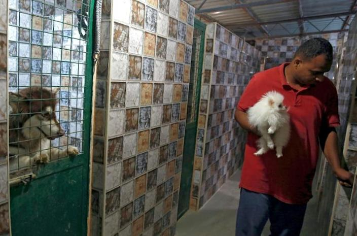 Room and board costs three Jordanian dinars ($4) a day at The Pet Zone in Amman, with anxious owners able to keep an eye on their pets via online cameras (AFP Photo/Khalil MAZRAAWI)