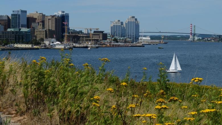 Georges Island 'a beautiful opportunity waiting to happen,' says MP
