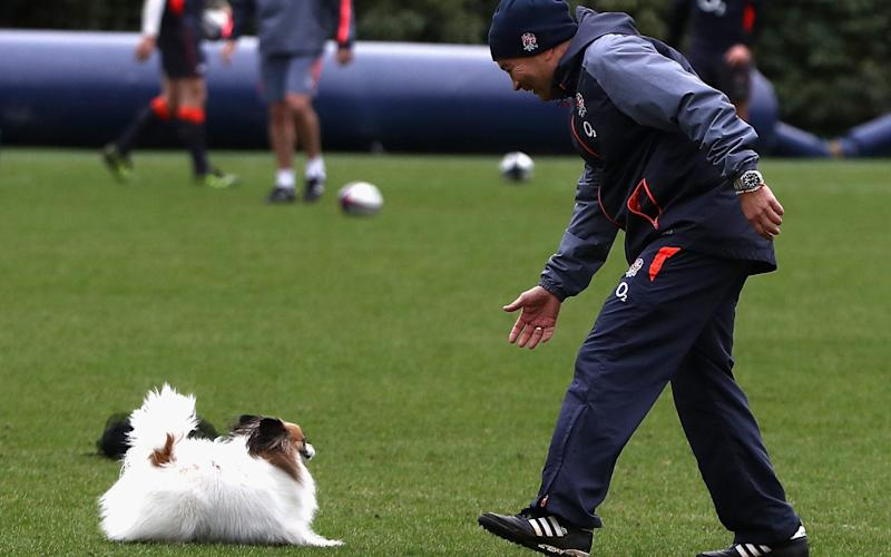 Eddie Jones with his dog, Annie, at England training - Getty Images