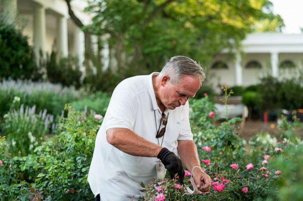 PHOTO: A man cares plants in restored Rose Garden, Aug. 21, 2020, at the White House. (Official White House Photo by Andrea Hanks)