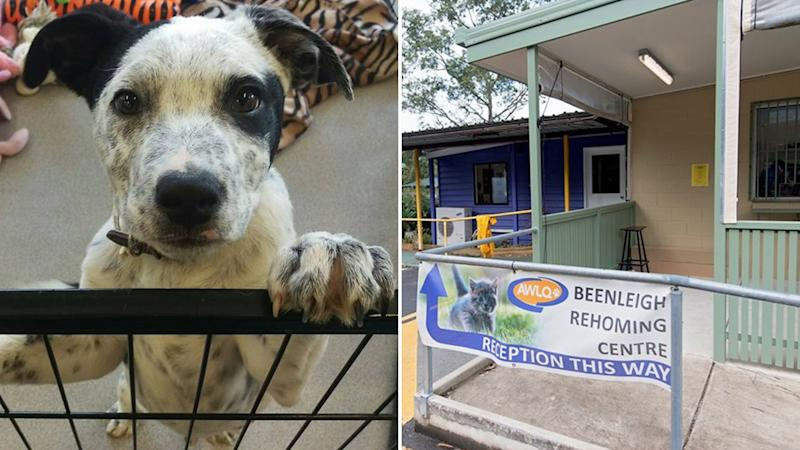 An exterior of the AWLQ Beenleigh Rehoming Centre on the right and one of the dogs at the shelter on the left.