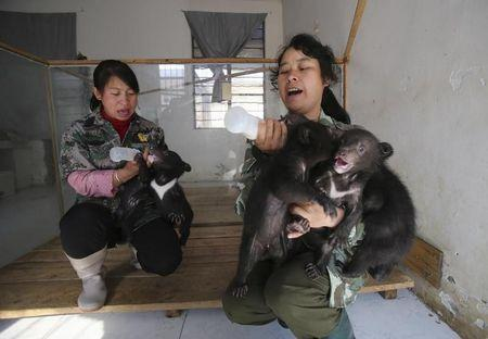 Breeders feed black bears cubs at a zoo in Kunming