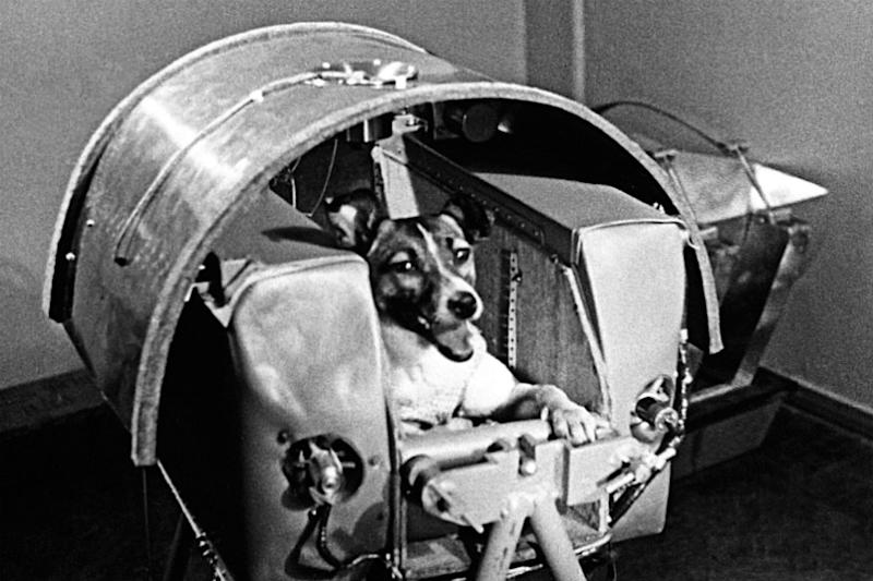 Laika the Space Dog: 62 Years Later, Remembering the Story of a 'Space Spectacle'