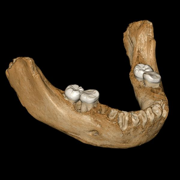 A virtual reconstruction of a Denisovan mandible found in Tibet (AFP Photo/Jean-Jacques HUBLIN)
