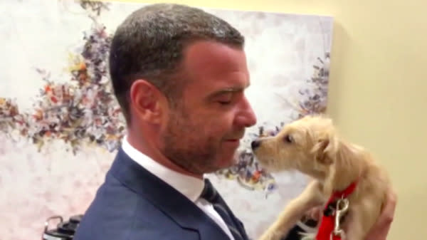 Liev Schreiber Adopts 2 Houston Rescue Puppies On 'Kelly and Ryan'