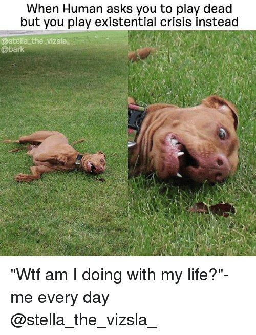 """when human asks you to play dead but you play existential crisis instead """"wtf am I doing with my life"""""""