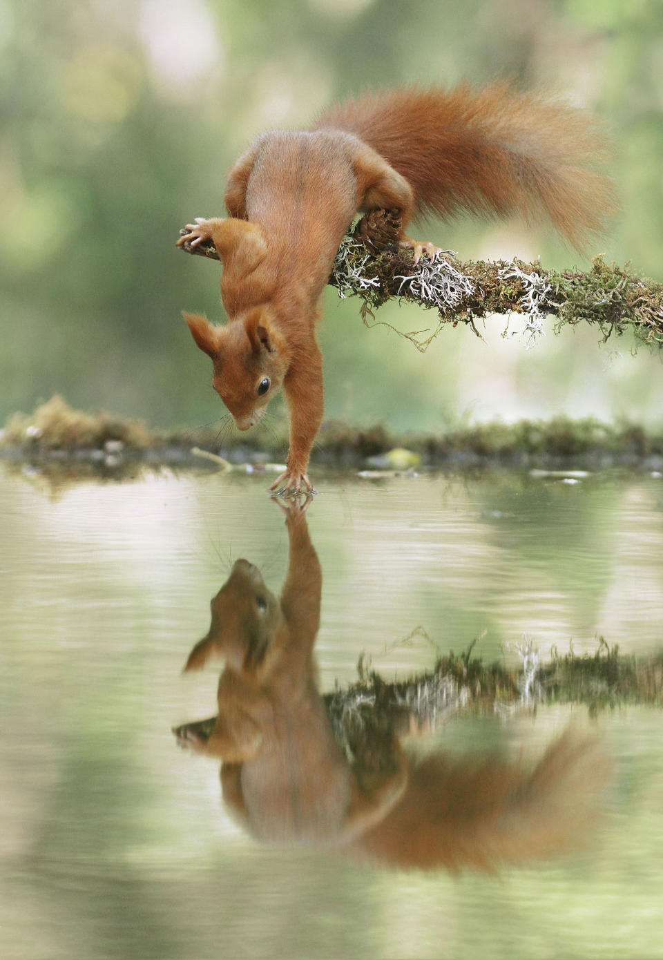 <p>A squirrel looks at its reflection. (Photo: Julian Rad/Caters News) </p>