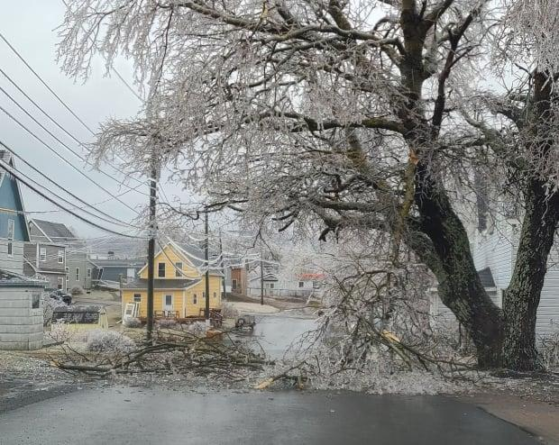 Many roads in Cape Breton were made impassable by downed trees, downed power lines, and flooding as freezing rain and ice pellets swept through the province on Sunday. (Submitted by Alyssa Basker - image credit)