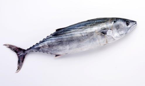 Autism Not Linked To Eating Fish During Pregnancy Large