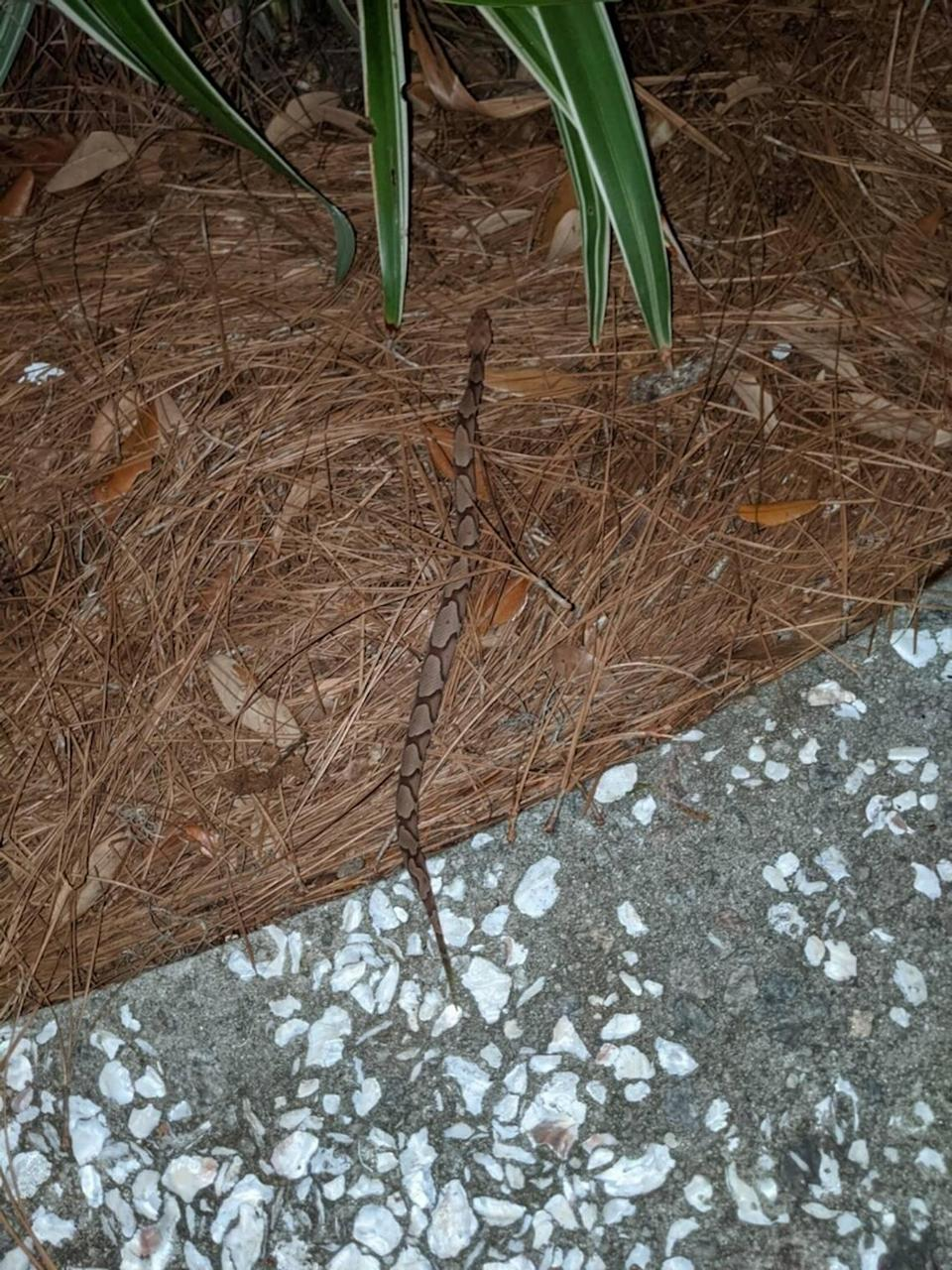 Susan Conlin O'Neil snapped this photo of the copperhead snake that bit her on May 5. She then went to the hospital for treatment.