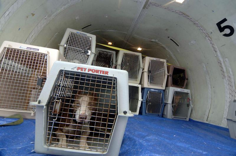 United halts shipments of pets in cargo hold after a puppy's death, dog mix-ups bring bad publicity