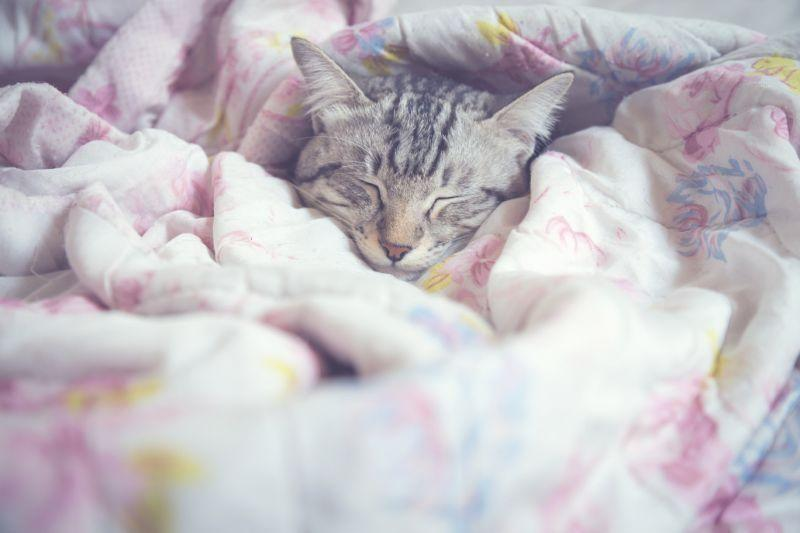 50 per cent of British pet owners let them sleep in the bed. Photo: Getty