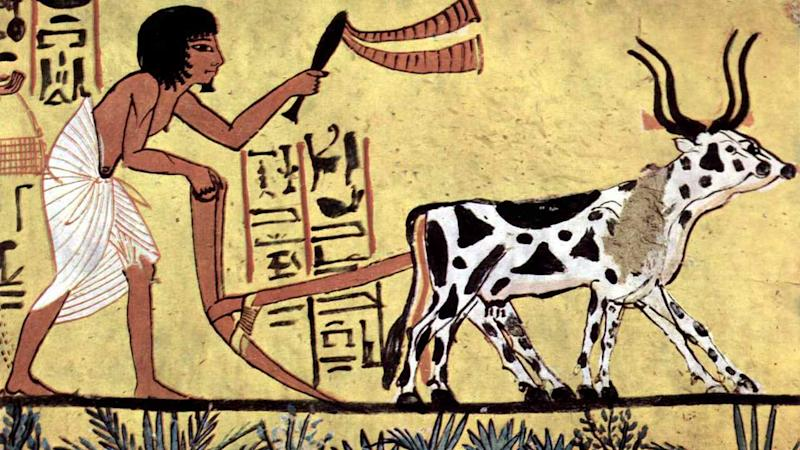 A prehistoric painting of an Egyptian man and his ox.