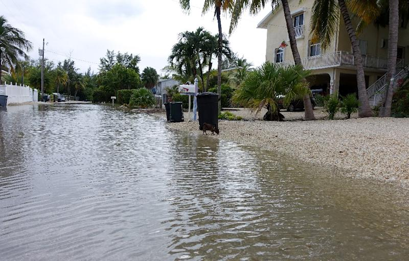 Adams Drive in Key Largo, Florida has been flooded for nearly a month, after high tides were exacerbated by a super moon (AFP Photo/Kerry Sheridan)