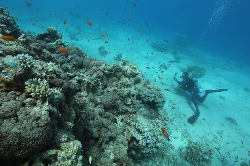 A scuba diver checks coral reefs in the Red Sea off the southern Israeli resort city of Eilat on June 12, 2017