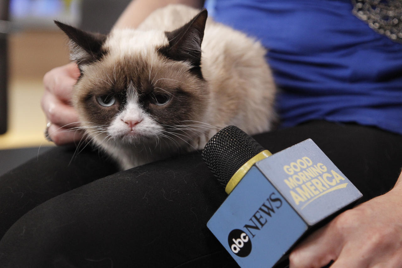 Grumpy Cat was not amused by the interview portion of the show.