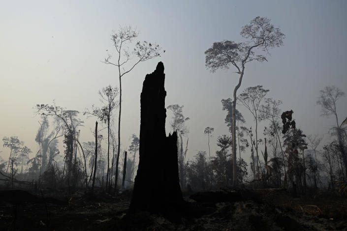 Charred trees stand after a forest fire in the Vila Nova Samuel region, along the road to the Jacunda National Forest near the city of Porto Velho, Rondonia state, part of Brazil's Amazon, Aug. 25, 2019. (Photo: Eraldo Peres/AP)