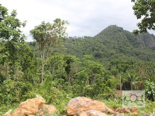 Palawan aims to plant 10 million trees by 2016