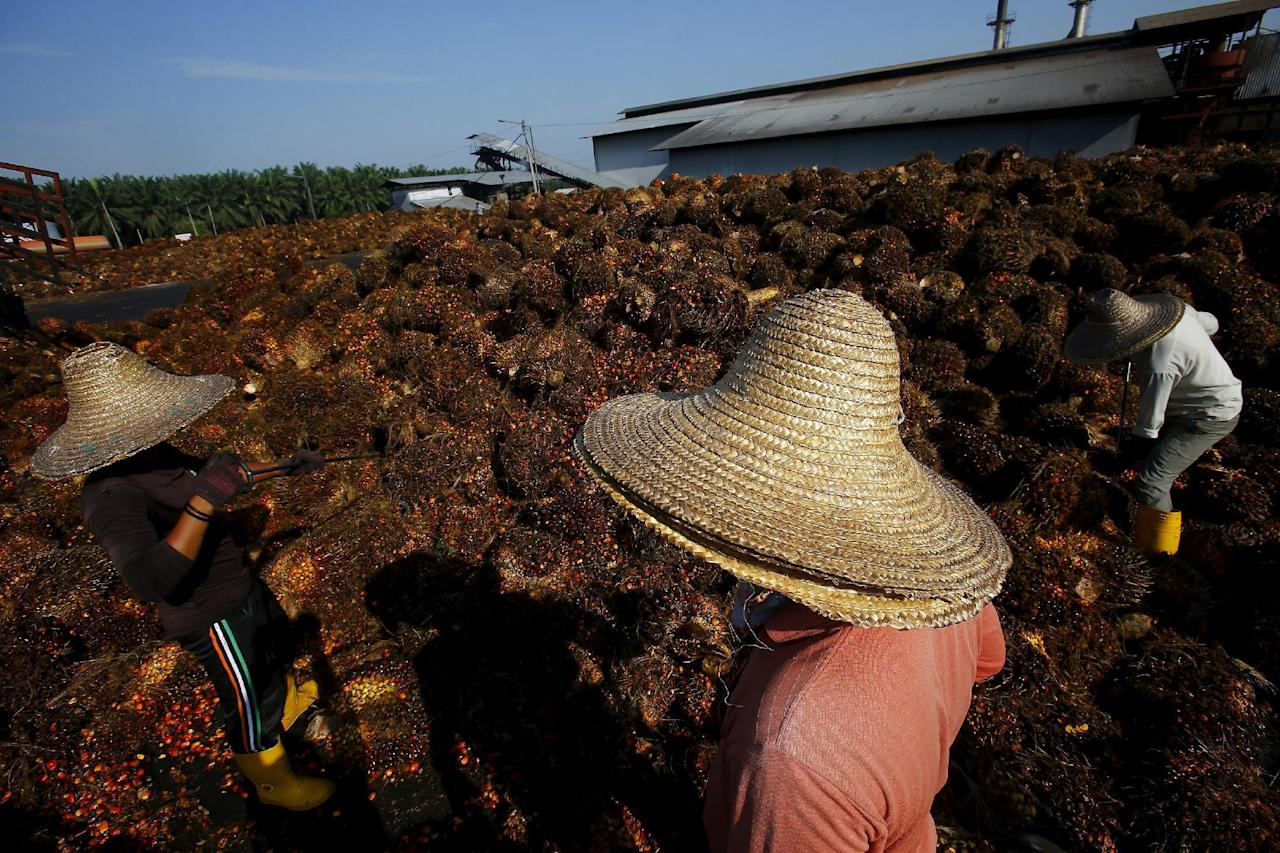 FILE PHOTO: A worker collects palm oil fruit inside a palm oil factory in Sepang, outside Kuala Lumpur in this June 18, 2014 file photo.  REUTERS/Samsul Said/File Photo