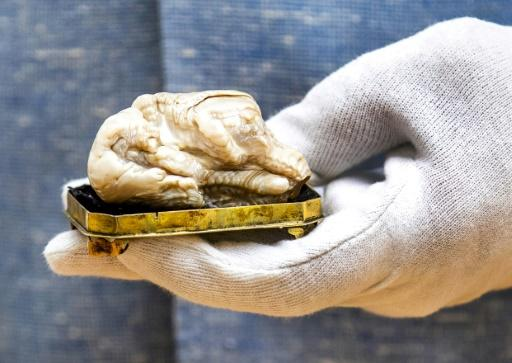 The Sleeping Lion pearl was likely formed in the first half of the 18th century in Chinese waters