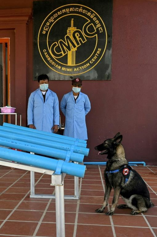The dogs trainig to sniff out Covid in Cambodia have so far proven to be very good boys (AFP/TANG CHHIN Sothy)