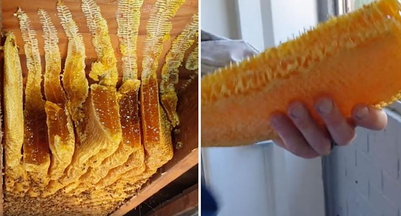 Honeycomb with 50kg of honey shown after being removed from a woman's roof in Brisbane.