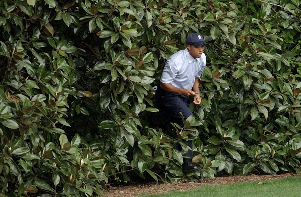 <p>Tiger Woods emerges from the bushes after hitting himself out on the fifth fairway during the first round of the Masters golf tournament at the Augusta National Golf Club in Augusta, Ga., Thursday, April 8, 2004. Woods double bogeyed the fifth hole. (AP Photo/David J. Phillip) </p>