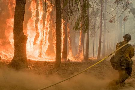 Firefighter fight fire near torching trees as wildfire burns near Yosemite National Park