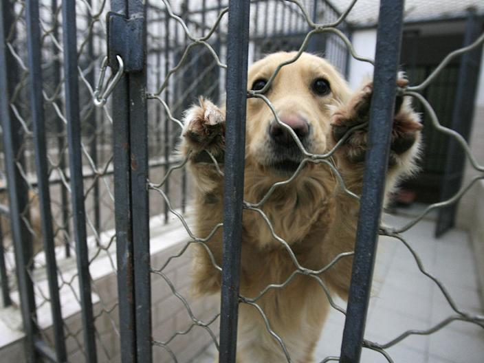 A dog that was seized due to concerns by Beijing authorities over the growing number of canines in the city and the rising incidence of rabies  (AFP via Getty Images)