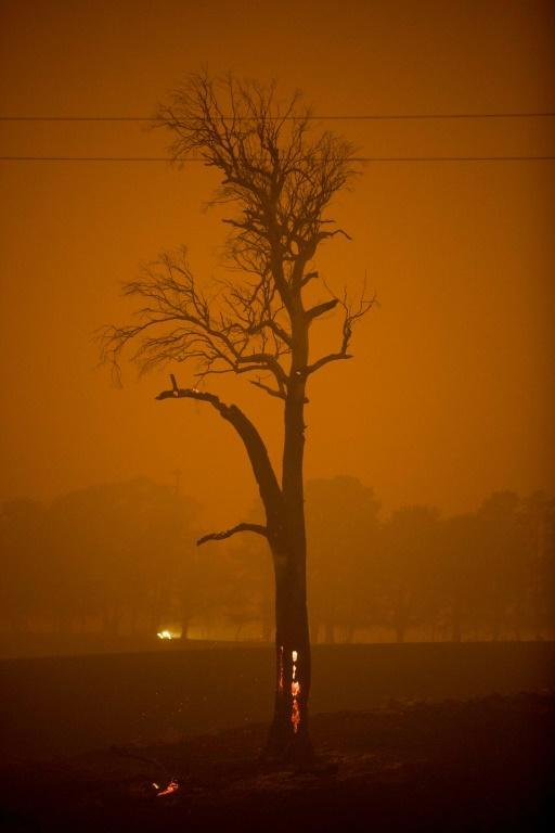 Tinder-dry conditions and strong winds have fanned a devastating fire season (AFP Photo/SEAN DAVEY)