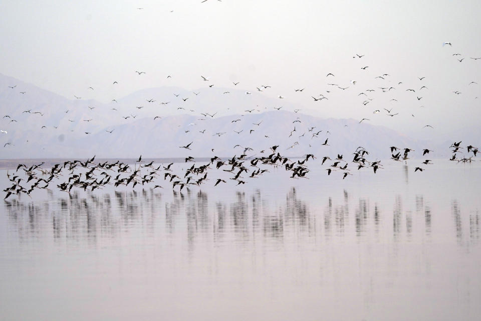 Birds take flight in the Salton Sea on the Sonny Bono Salton Sea National Wildlife Refuge Thursday, July 15, 2021, in Calipatria, Calif. Demand for electric vehicles has shifted investments into high gear to extract lithium from geothermal wastewater around the rapidly shrinking body of water. The ultralight metal is critical to rechargeable batteries. (AP Photo/Marcio Jose Sanchez)