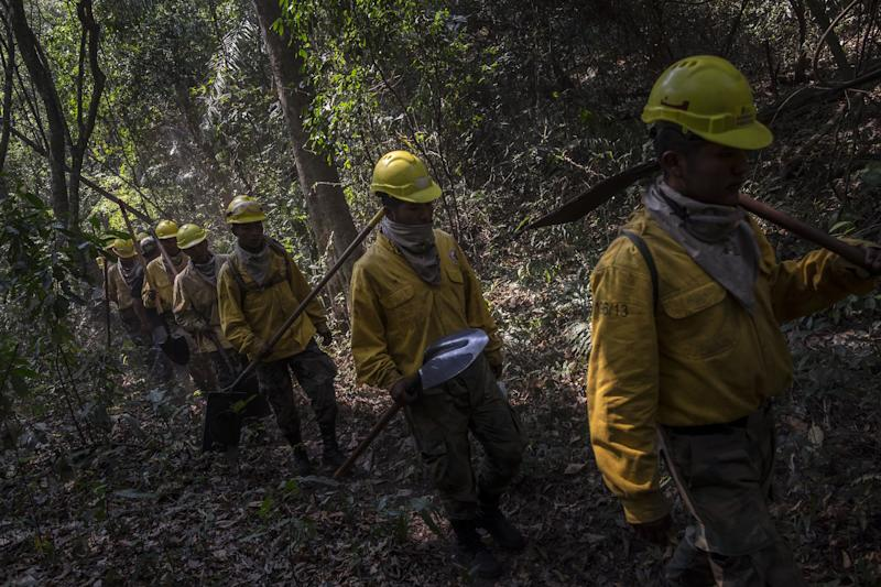 "SANTA CRUZ, BOLIVIA - AUGUST 24 : A group of forest firefighters walks towards to fight a fire in the Chiquitania region, the largest tropical dry forest eastern Bolivia on August 24, 2019. More than 750,000 hectares of forest have been turned into ashes during the latest days, according to the Bolivian Government. The fires have hit the country's Amazon side with an 83% increase on last year. Brazil and Bolivia are under ""extreme risk"" from forest fires. (Photo by MARCELO PEREZ DEL CARPIO/Anadolu Agency via Getty Images)"