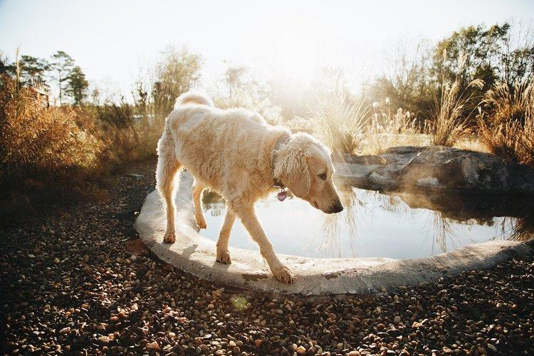 There are six friendly blond dogs on the property: Pippin, Lilith, Effey, Hazel, Maple and Mr. Bingley. Photo credit: Airbnb.