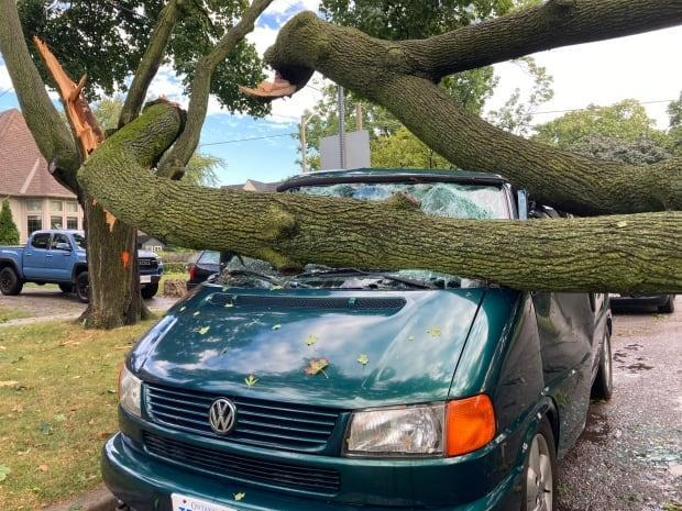 A large tree had fallen onto a vehicle overnight on Bessborough Drive in Leaside. (Pelin Sidki/CBC - image credit)